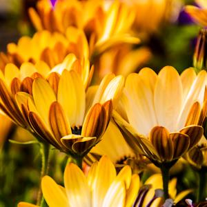 flowers in Depoe Bay-5770.jpg