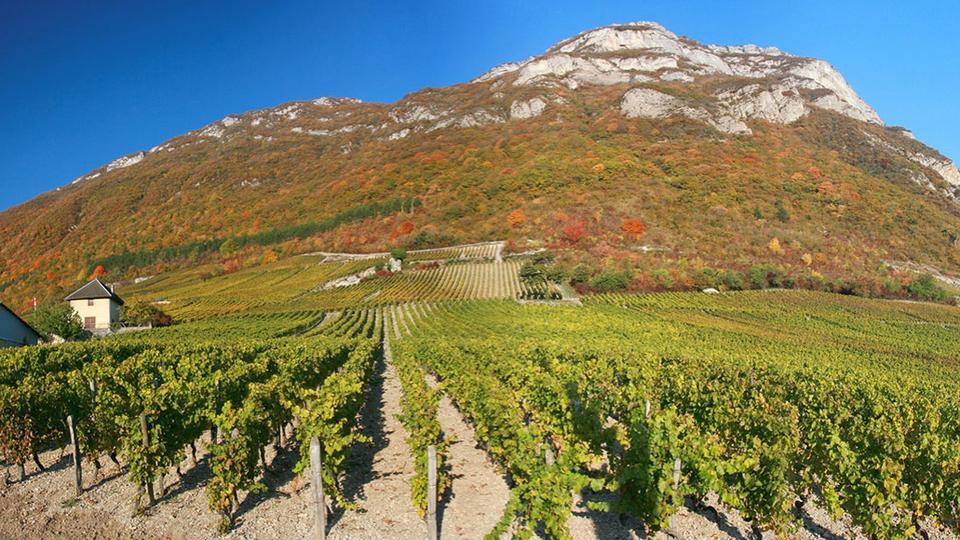 Vigneron en Savoie