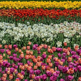 Nature color by Damir Ipavec - Nature Up Close Gardens & Produce