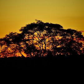 Alianças SP Brazil  by Marcello Toldi - Nature Up Close Trees & Bushes