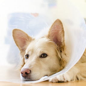 Conehead by Chris Couper - Animals - Dogs Portraits