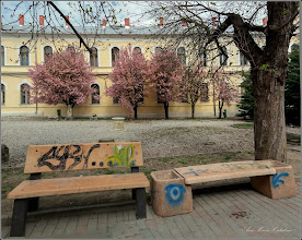 Photo: Turda - Str. B. P.Hasdeu - Lapidariu - 2019.04.06