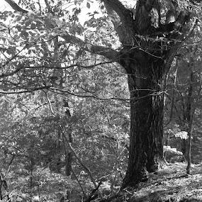 by Rebecca Mosher-Schmidt - Black & White Landscapes