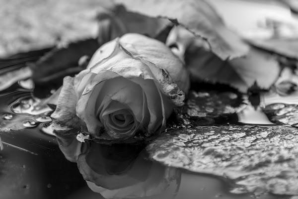 Sadness di Andrea Calò