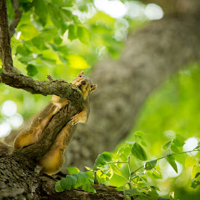 Squirrels are Lazy by Jeffrey Zoss - Animals Other Mammals ( awesome, green, lazy, cute, squirrel )