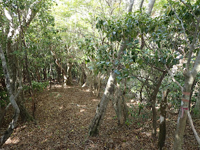 濃い灌木帯を進む
