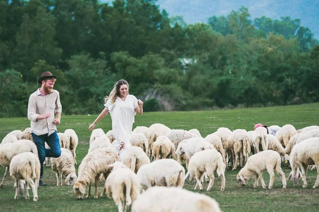 Đồi Cừu Xứ Nghệ 1