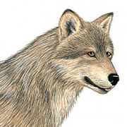 App Icon for Mammals of North America App in Czech Republic Google Play Store