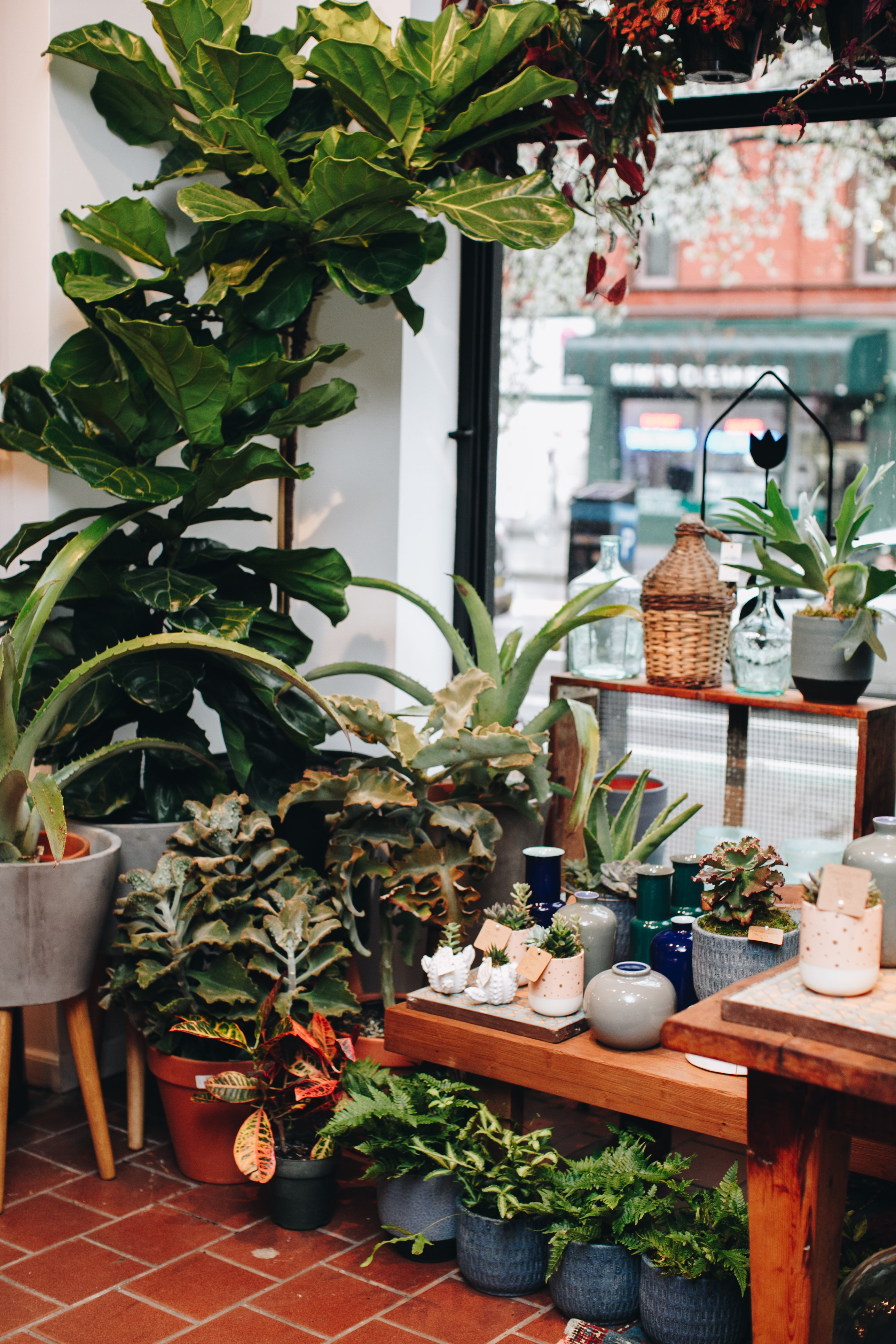 PlantShed New York Flowers image