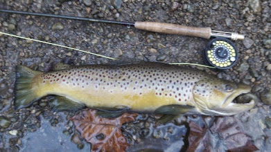 Photo: Our friend Tom Helbig from Dayton, Ohio caught this beast on the Mad River on a nymph