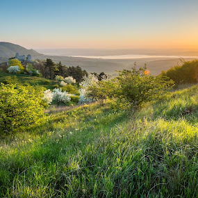 The Sunrise at Stolová hora by Jan Stupka - Landscapes Prairies, Meadows & Fields ( hill, grass, blooms, ruin, morava, landscape, morning, spring, bushes, pálava, dam, czech republic, castle, sunrise )
