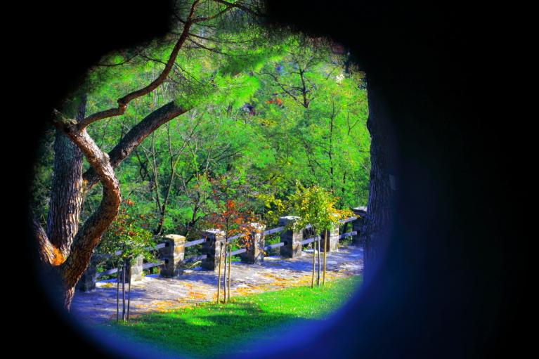 Tra un pertugio di un albero malandato di pierce