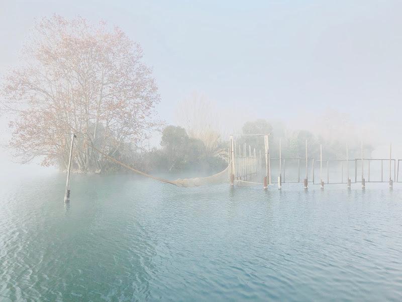 Fog di Yasis