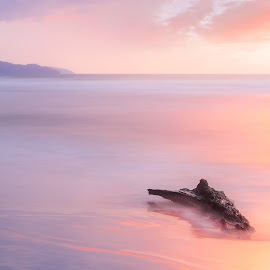 Washed up log by the serene beach by Ervin Moung - Landscapes Beaches ( magenta, pink, dead wood, log, magenta and pink, dead log, afternoon, calm, romantic, beach, wood, evening, serene, washed up, soft,  )