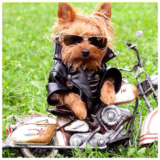 生活のかわいい犬のライブ壁紙 LOGO-記事Game