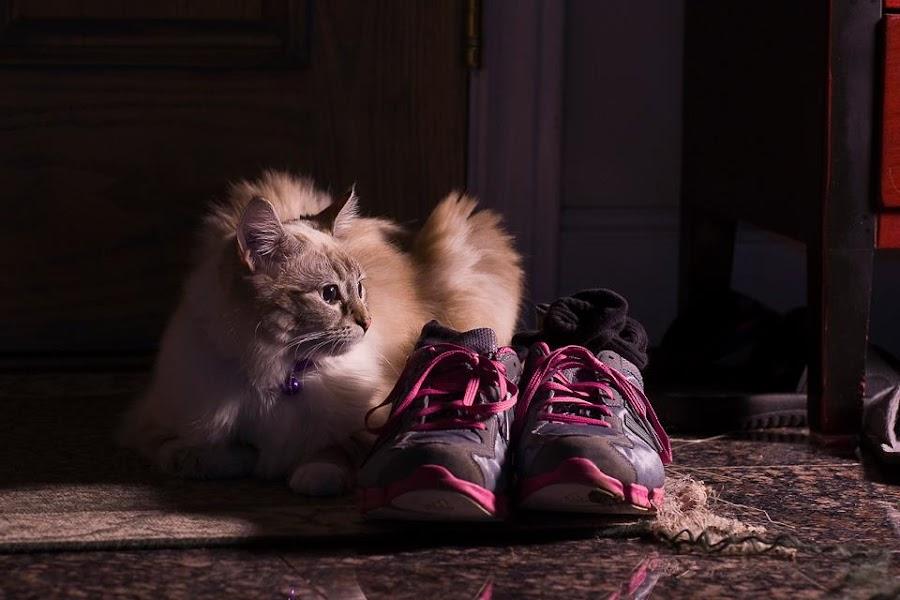 by Ryan Li - Animals - Cats Kittens