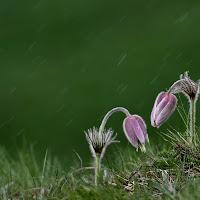La pioggia ci piega ma non ci spezzerà. di
