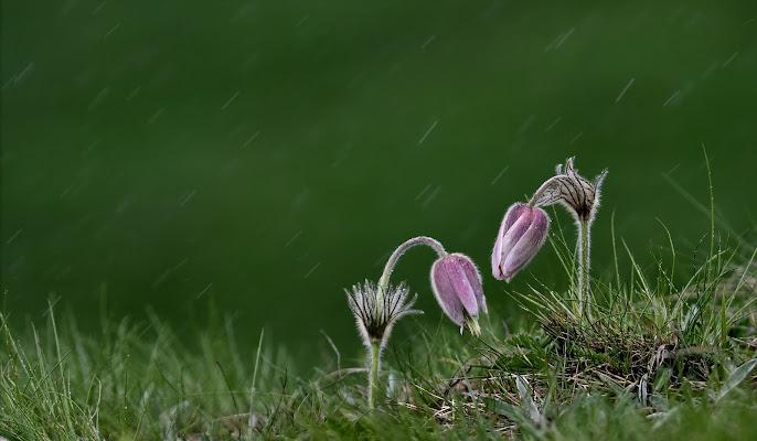 La pioggia ci piega ma non ci spezzerà. di gigidueelle
