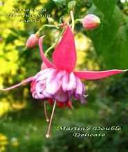 Photo: Martin's Double Delicate