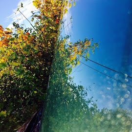 SUMMER by Eirin Hansen - Nature Up Close Water