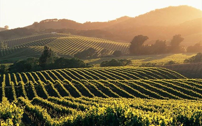 Виноградники Бордо, Самые красивые ландшафты Франции, Самые красивые места во Франции, природа, ущелья, виноградники, скалы, долины, куда стоит поехать во франции, лучшие места, зрелищные места Франции, Франция, города Франции, природа Франции, путеводитель по Франции, достопримечательности Франции