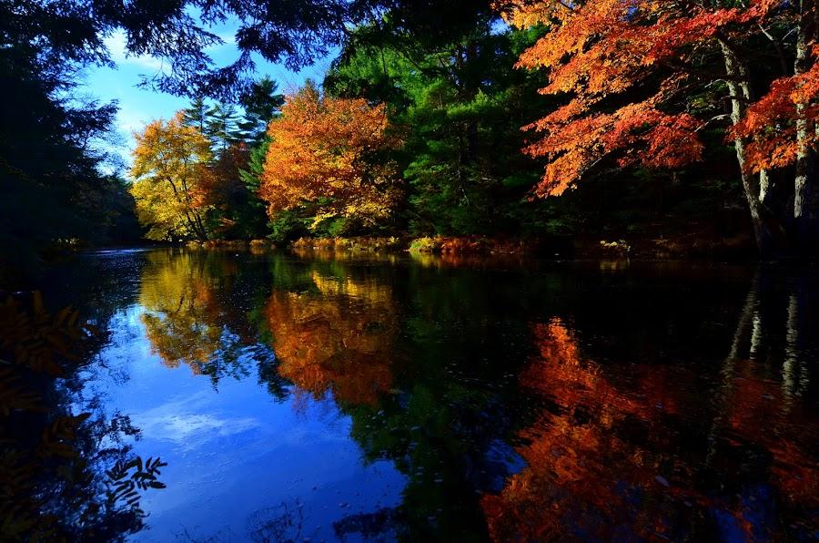 Autumn Colors by Eric Le Bel - Landscapes Forests ( autumn colors )