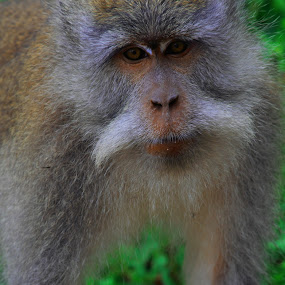 Godek by Rizal Marsa - Animals Other Mammals (  )