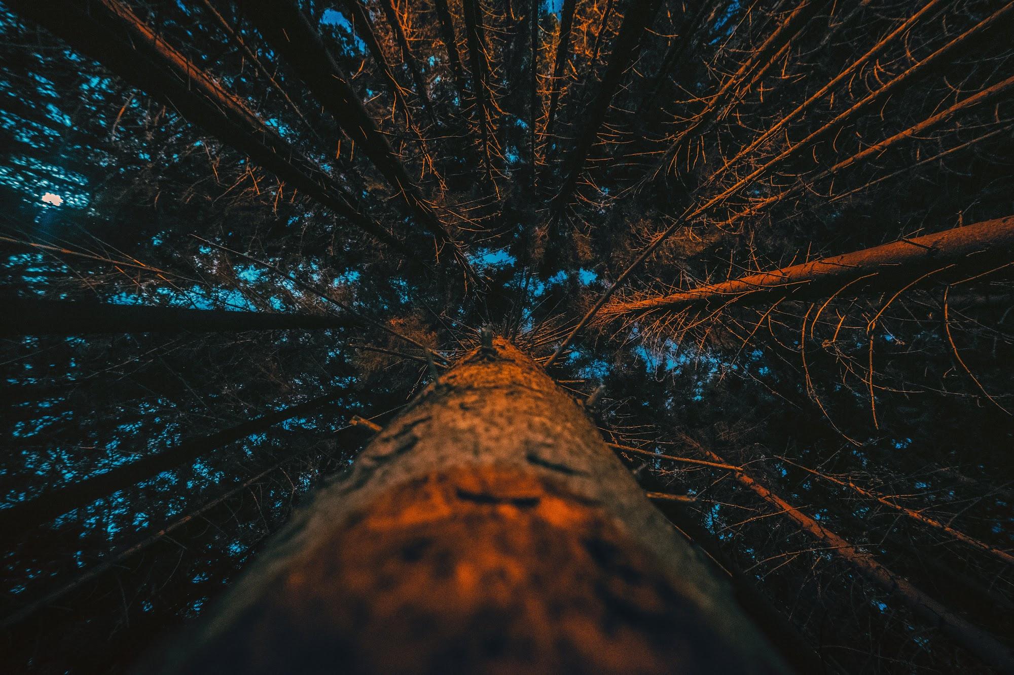 Ліс вночі біля пол.Веснарка