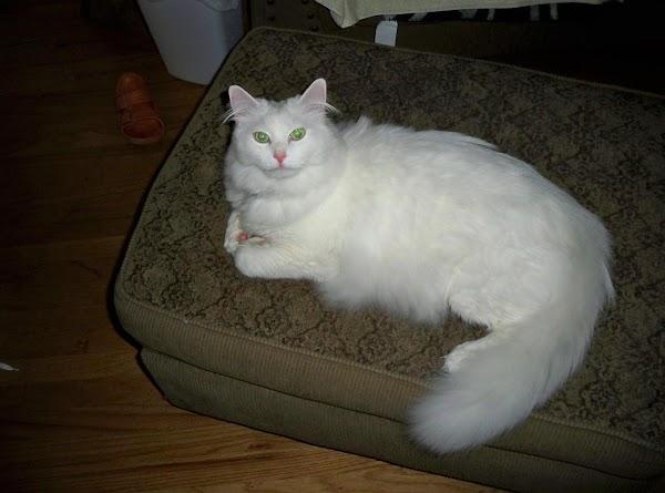 My handsome cousin Casper. Isn't he gorgeous?