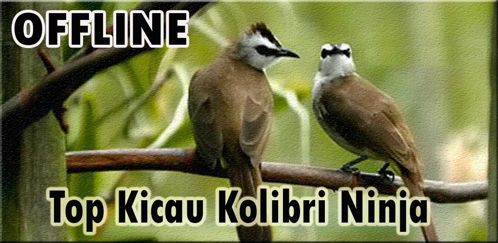 Suara Burung Trucukan Ropel 1 0 Apk Download Com Andromo Dev623619 App721065 Apk Free