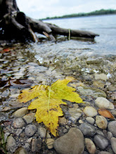 Photo: Yellow leaf in the lake at Eastwood Park in Dayton, Ohio.