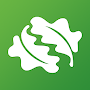 Download Tree ID - British trees apk