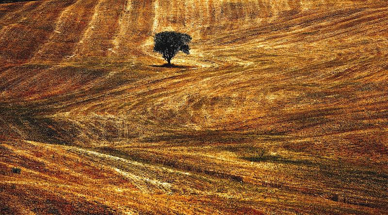 Terra amara, terra mia... di Francesco Abate