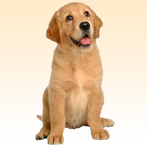 狗听起来 模擬 App LOGO-硬是要APP