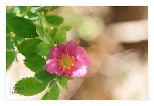 Photo: Eastern Sierras-20120716-395