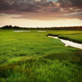 Green Overdose by Daniel Schwarz - Landscapes Prairies, Meadows & Fields