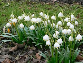 Photo: Bledule jsou na jaře na mnoha místech kolem cyklotrasy.
