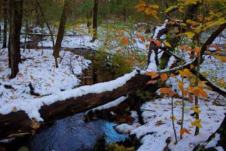 Photo: Beech sapling by stream after freak October snow.