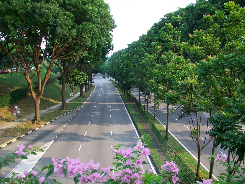 Đảm bảo trồng cây ở Tây Ninh chất lượng