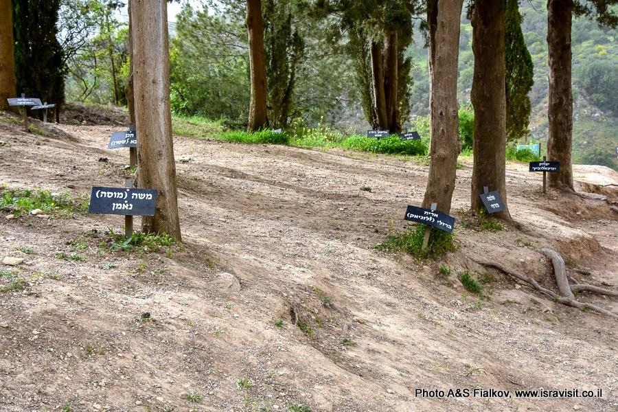 Тропа Пальмаха в горах Нафтали. История Израиля.