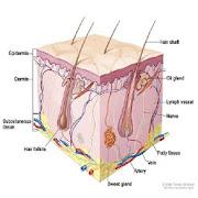 Dermatology Made Easy