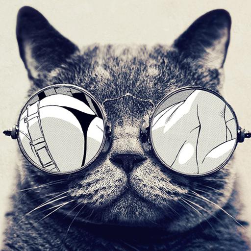 Lucu Kucing Lwp Aplikasi Di Google Play