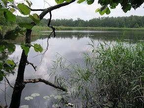 Photo: C6120042 rezerwat Łężczok - pocysterskie stawy