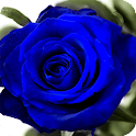 Blue Rose Live Wallpaper icon