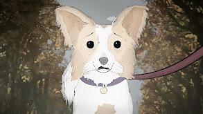 Dogs. thumbnail