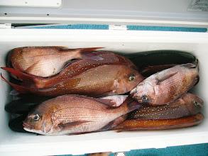 Photo: おじさまも! よく釣ってました。