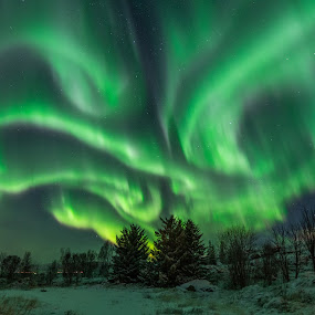 Wide aurora by Benny Høynes - Landscapes Weather ( aurora borealis, northern lights, landscape photography, forest, greenery, stars,  )