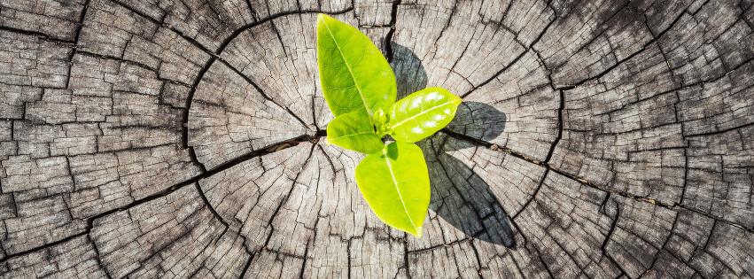 Ein grünes Blatt wächst auf einem trockenen Baum