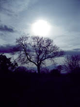 Photo: Tree On The Hilltop