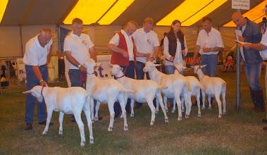 Photo: Rubriek 5: witte lammeren geboren tussen 9-2 en 24-2 2013.  1a. Marijke 205; 1b. Elke 2 vd Vriendsenhof; 1c. Janneke 6 vd Vriendsenhof; 1d. Anneke 9 vd Vriendsenhof; 1e. Maisy 37; 2a. Klazien 21.